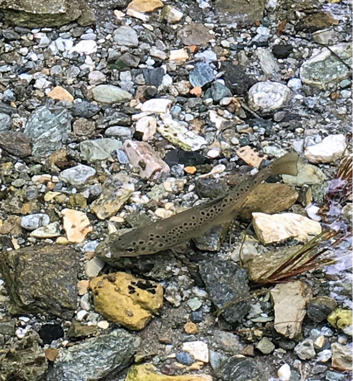 Ouverture de la pêche en rivières