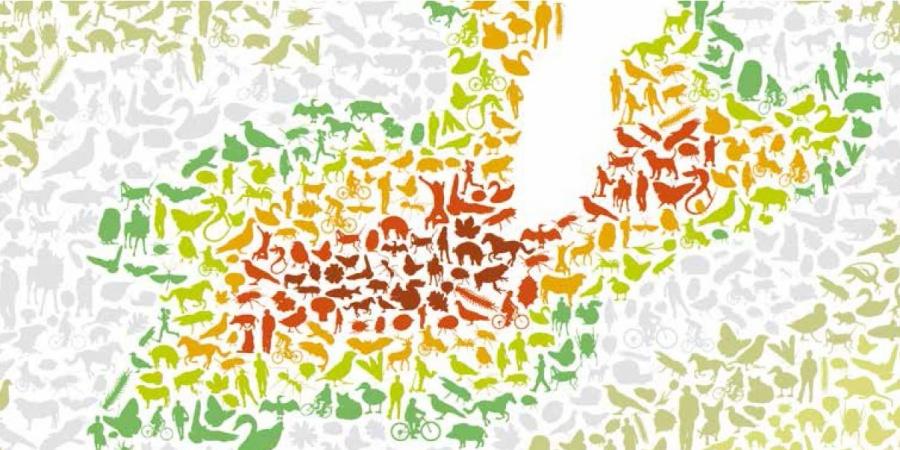 Stratégie Biodiversité Genève 2030