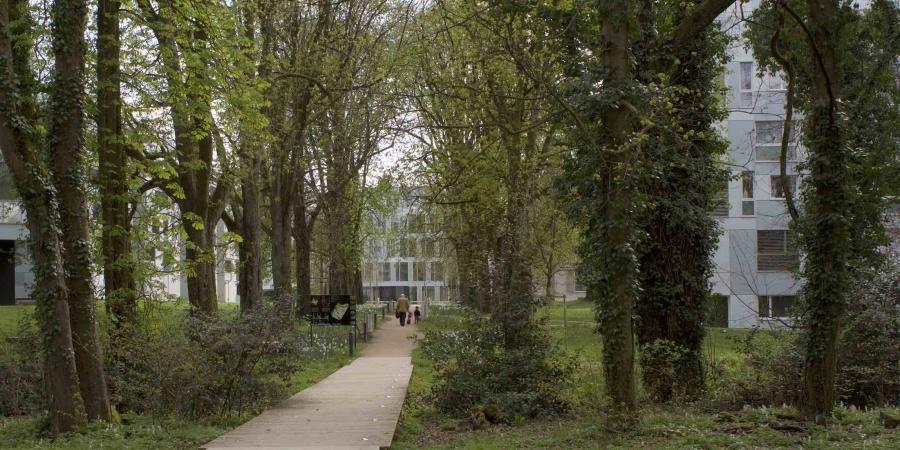 La prise en compte du patrimoine arboré existant, ici les Hauts de Malagnou, un principe pour Cointrin © De Limoges
