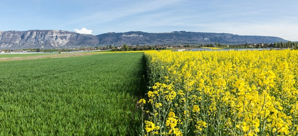Agriculture Genève