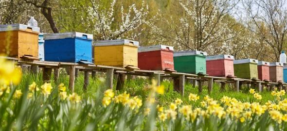 Nouvel inspecteur cantonal des ruchers à Genève