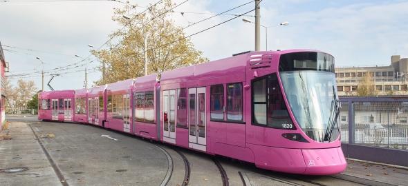 Tram rose