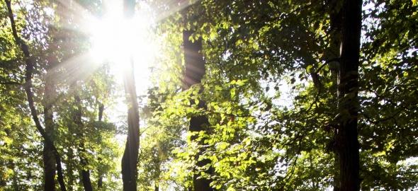 Vague de chaleur sur la forêt genevoise