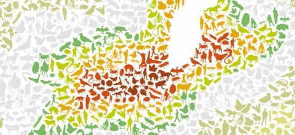 Rapport biodiversité Cour des comptes