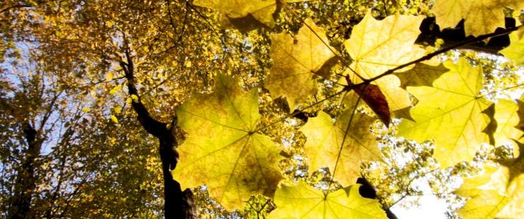 Bois de Châtillon en automne