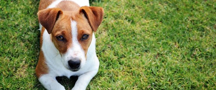 Maladie sévissant actuellement chez des chiens en Norvège