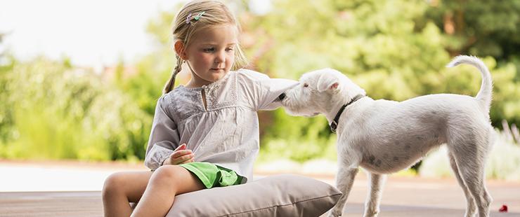 Information concernant la remise de marque de contrôle pour les chiens