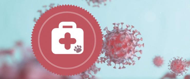 Coronavirus – informations concernant les affaires vétérinaires