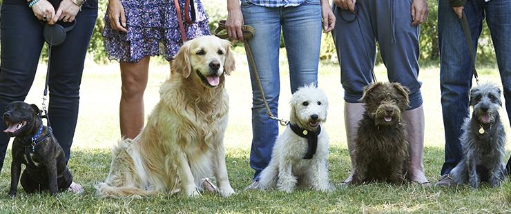 Suppression des cours obligatoires pour les détenteurs de chiens