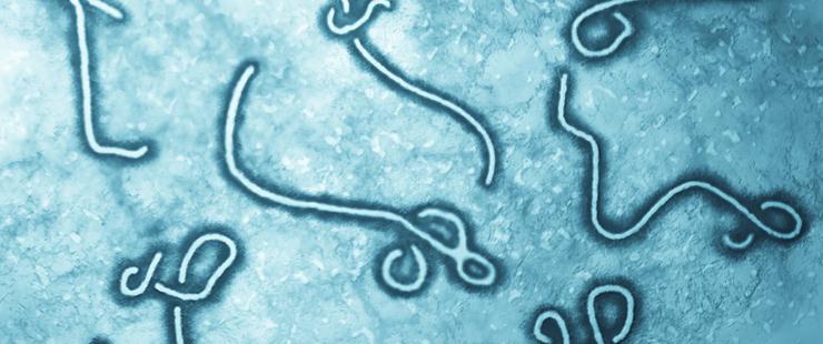 Hospitalisation aux Hôpitaux universitaires de Genève d'une personne atteinte du virus Ebola