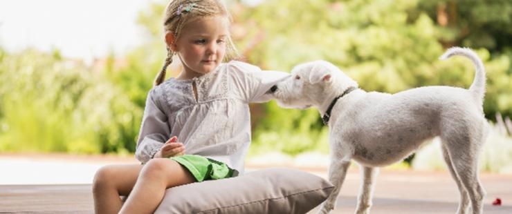 Eduquer afin d'éviter les morsures de chiens
