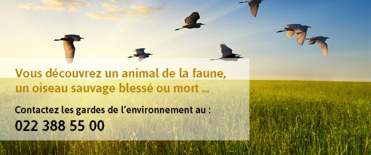 Vous trouvez un animal sauvage mort ou blessé ... contactez les gardes de l'environnement au 022 388 55 00