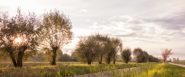 Nature - Antonin Jaquet